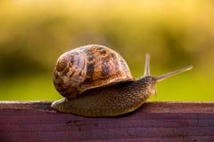 等待奇迹的蜗牛 库存图片