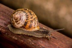 等待奇迹的蜗牛 免版税库存图片