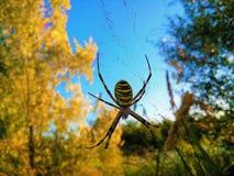 等待客人的蜘蛛 免版税库存照片