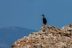 等待正确的片刻的鸟 免版税库存照片