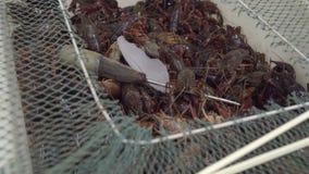 等待的小龙虾被卖在中国街市上 影视素材