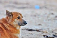等待的狗 免版税图库摄影