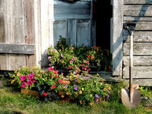 等待的花被种植 库存图片