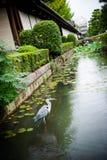 等待的鸟在水中 免版税库存照片