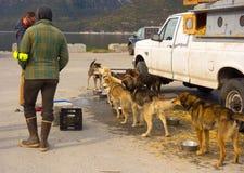等待的Mushers在阿拉斯加装载他们的在直升机上的动物 免版税库存照片