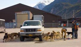 等待的Mushers在阿拉斯加装载他们的在直升机上的动物 库存图片