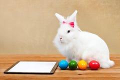 等待网上命令的复活节兔子 库存照片