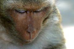 等待自由午餐的泰国寺庙短尾猿` s 图库摄影