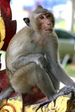 等待自由午餐的泰国寺庙短尾猿` s 免版税库存照片