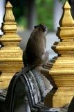 等待自由午餐的泰国寺庙短尾猿` s 免版税库存图片