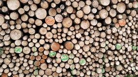 等待运输的新近地cutted树 免版税库存照片