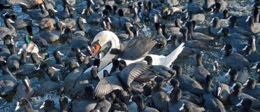 等待食物的鸟在冬天 库存照片