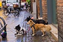 等待他们的在商店,市前面的狗大师费拉拉 库存图片