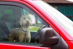等待他的所有者的狗 免版税库存图片