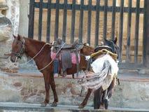 等待他们的车手的被备鞍的马 免版税图库摄影