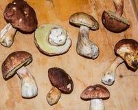 等概率圆蘑菇 库存照片