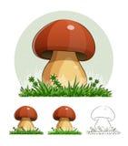 等概率圆 蘑菇 免版税库存图片