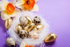 筑巢用鸡蛋和黄水仙在蓝色背景复活节 图库摄影