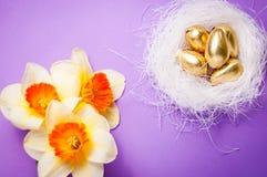 筑巢用鸡蛋和黄水仙在蓝色背景复活节 库存照片