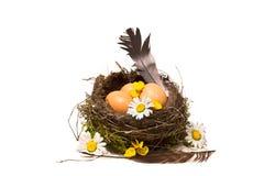 筑巢用鸡蛋,复活节庆祝在乡下 免版税图库摄影