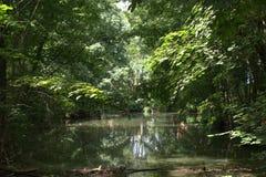 筑成池塘与反射在水和阳光的低垂悬的树枝溢出  免版税库存图片