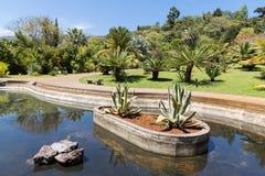 筑成池塘与棕榈树在植物园马德拉岛里 免版税库存图片