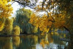 筑成池塘与秋天树在城市庭院里 库存图片