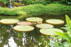 筑成池塘与荷花和棕榈树在新加坡植物园里 库存照片
