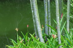 筑成池塘结构树 免版税库存图片