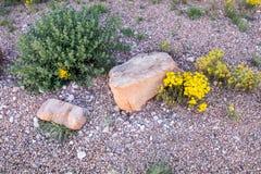 简单和可爱的自然沙漠设置 免版税库存图片