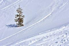 简单派风景冬天斯诺伊背景 免版税库存图片