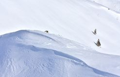 简单派风景冬天斯诺伊背景 图库摄影