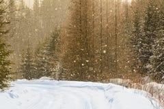 简单的多雪的轮胎轨道-画象 免版税图库摄影