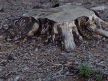 简单的树桩 免版税库存照片
