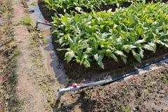 简单的灌溉系统 库存照片