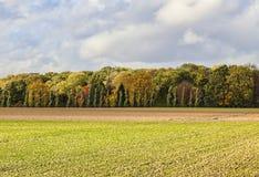 简单的秋天风景 库存照片
