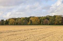简单的秋天风景 免版税库存图片