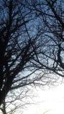 简单的结构树 免版税库存照片