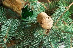 管和香槟说谎在云杉的分支,在管的焦点,圣诞节背景的一个空的瓶 库存照片