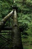 管在森林里 免版税库存照片