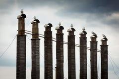 管子标示用木头反对天空 在每个管子上坐海鸥 布朗,蓝色颜色 图库摄影