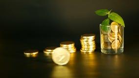 管理效率 堆在充分的玻璃和新芽附近绿色叶子的金黄硬币在黑背景的 成功 股票录像
