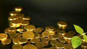 管理效率 金黄硬币和新芽绿色叶子在黑背景的 转动,扭转,打旋的便士 股票录像