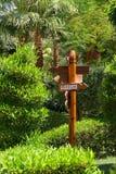 箭头庭院棕榈树 免版税库存图片