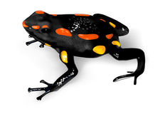 箭青蛙毒物里约圣地亚哥 图库摄影