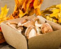箱子与秋天的新鲜的Portobella蘑菇离开 库存照片