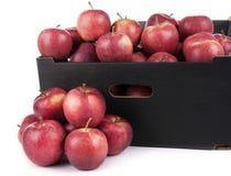 箱子准备好对销售红色王子Apples On White Backgr 库存照片
