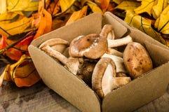 箱子新鲜的Portobella采蘑菇与秋叶 库存图片