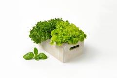 箱子莴苣 免版税库存图片