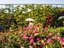 箱根,日本- 2017年7月02日:关闭美丽的春天桃红色花在一个公园在日本 图库摄影